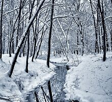 River in the winter forest by Serhii Simonov