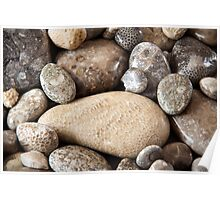 Fossil stones from the shore of Lake Michigan Poster