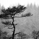8.1.2015: Pine Tree, Snowfall IV by Petri Volanen