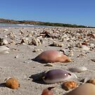 Scattered Shells by Bronwyn Houston
