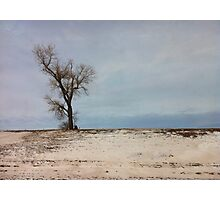 Turn left at the tree... Photographic Print