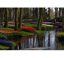 Keukenhof Garden Photographic Print