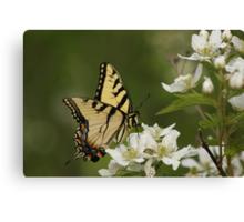 Tiger Swallowtail 2 Canvas Print