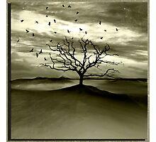 Raven Valley Photographic Print