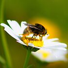 Pollinated 2 by jdmphotography