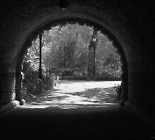 Tunnel Vision by Judith Oppenheimer