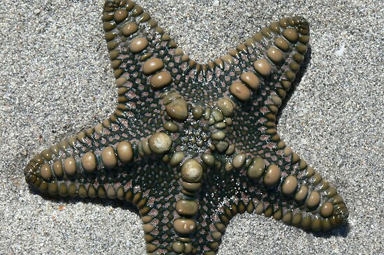 Starfish by Bronwyn Houston
