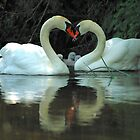 Swans -LOVE IS. by delros