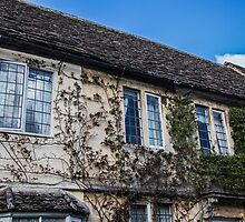 Vine-Covered Walls in Lacock by Nicole Petegorsky