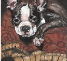 Stella by Liz Thoresen