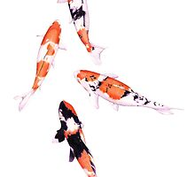 Floating Koi by mrana