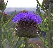 Artichoke Flower by Catherine Beldon