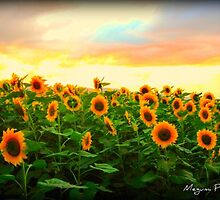 Sunflowers and Sunsets by Megumi Powell