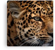 Leopard Focus Canvas Print
