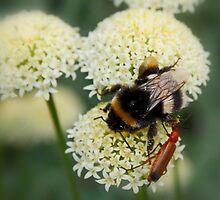 Bee & Soldier Beetle by AnnDixon