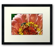 Tiny Bee on a Flower Framed Print