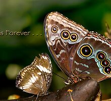 Pals Forever by Bonnie T.  Barry