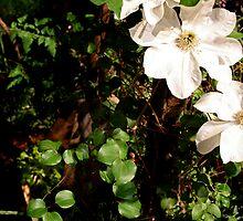 Orchid Garden by Jill Sprague