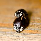 Ladybugs, Ladybugs, what are you doing? by Geoffrey