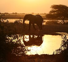Sunset - Chobe National Park by dulkeith