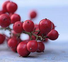 Berries  by Susan van Zyl