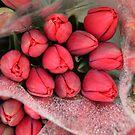 Tulips For Sale by Merilyn