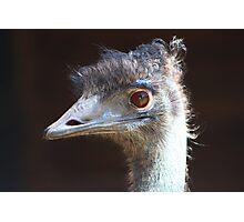 The Emu Photographic Print