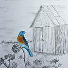Bluebird by Jack G Brauer