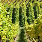 Rolling Vines - Lenswood by LeeoPhotography