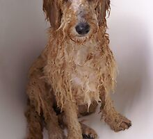 Wet Dog by melbourne