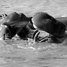Kissing Hippos by Kathleen Struckle