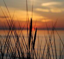 Coastal Grass by KeepsakesPhotography Michael Rowley