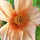 Peachy Petals by Monnie Ryan