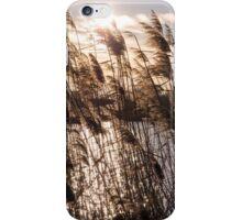 Reeds at Sunset iPhone Case/Skin