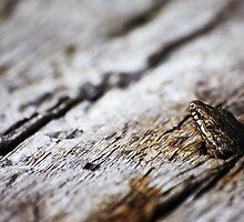 Little Lizard by Alison Cornford-Matheson
