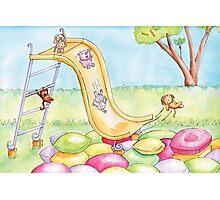Baby Animal Slide Photographic Print