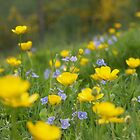 meadow by Catherine Beales