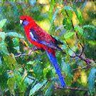 Crimson Rosella III by Imageo