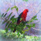 King Parrot III by Imageo
