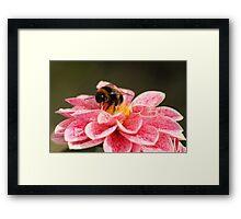 Dahlia & Bee Framed Print