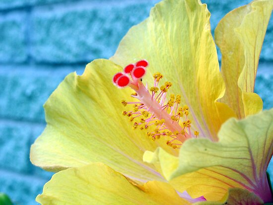 Lovely Hibiscus by T. Victor