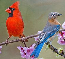 Red Bird, Blue Bird by Bonnie T.  Barry