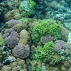 Lord Howe Island Coral by Geoffrey Chang