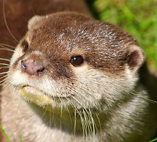 Otter Portrait by jdmphotography
