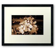 Blossom .. Framed Print
