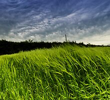 Barley before the storm by Alan E Taylor