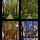 The Four Seasons at Colorado State University's Oval by FortPhoto
