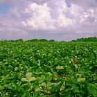 Strawberry Fields by MMerritt