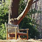 Bench by the old Tree by Bine