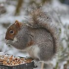 Squirrel by AnnDixon
